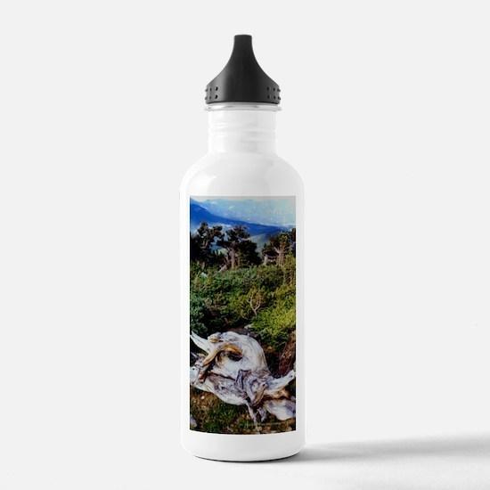 bristle jr Water Bottle