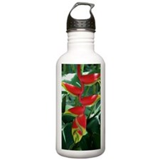 heliconiaframed14x10 Water Bottle