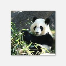 "panda2 - Copy Square Sticker 3"" x 3"""