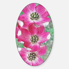 Pink Dogwood iPhone Hard Case, 3G,  Decal