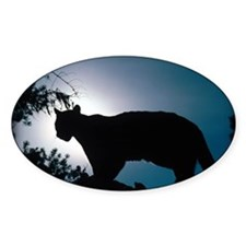 zazzle_cougar_silhouette_card1 Decal