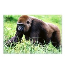 zazzle_gorilla_card1 Postcards (Package of 8)