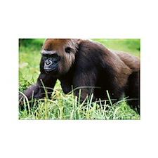 zazzle_gorilla_card1 Rectangle Magnet