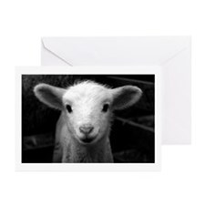 White Lamb Greeting Cards (Pk of 10)