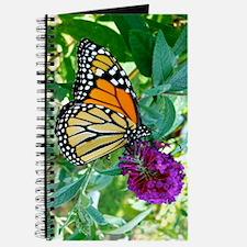 Monarch Butterfly 3G iPhone Hard Case Journal