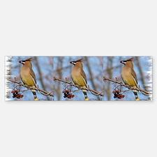 CDWax8.31x3 Bumper Bumper Sticker
