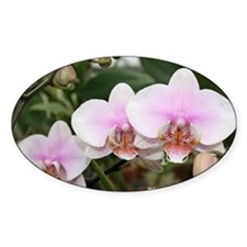 Phal. Melody Decal