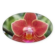 Phal. Brother Skimmer Decal