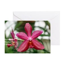Phal. Brother Flare x Tabasco Tex Greeting Card