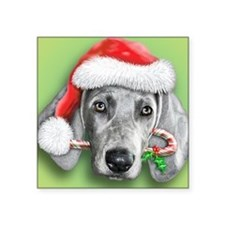 "Weimaraner Christmas stuff Square Sticker 3"" x 3"""