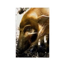(3) Pig Profile  1966 Rectangle Magnet