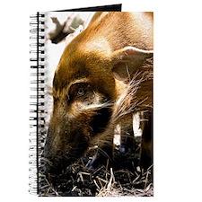 (3) Pig Profile  1966 Journal