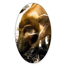 (3) Pig Profile  1966 Decal