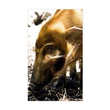 (6) Pig Profile  1966 Decal