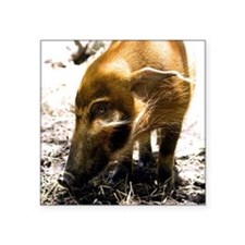 "(15) Pig Profile  1966 Square Sticker 3"" x 3"""