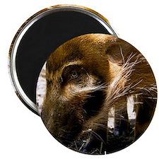 (12) Pig Profile  1966 Magnet