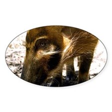 (12) Pig Profile  1966 Decal
