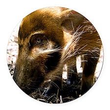 (12) Pig Profile  1966 Round Car Magnet