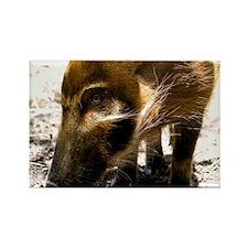 (12) Pig Profile  1966 Rectangle Magnet