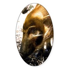 (9) Pig Profile  1966 Decal