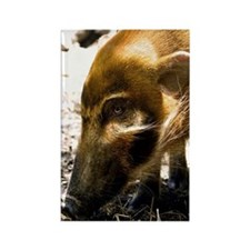 (9) Pig Profile  1966 Rectangle Magnet