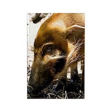 (10) Pig Profile  1966 Rectangle Magnet