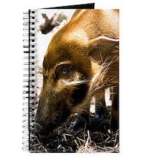 (10) Pig Profile  1966 Journal