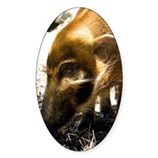 (10) Pig Profile  1966 Decal