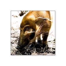 """(15s) Pig Profile  1966 Square Sticker 3"""" x 3"""""""