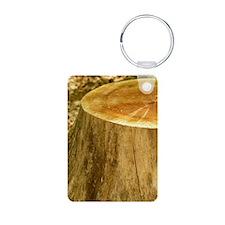 P1090087 2 Keychains