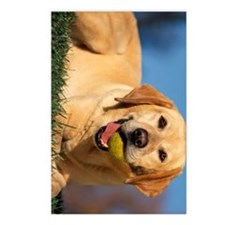 yellow lab ipad Postcards (Package of 8)