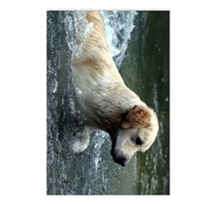 labradoodle ipad Postcards (Package of 8)