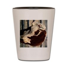 bull ipad Shot Glass