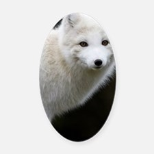 Artic Fox Oval Car Magnet