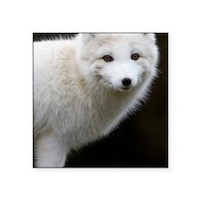 """Artic Fox Square Sticker 3"""" x 3"""""""