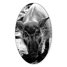 (3) Evil Pig Decal
