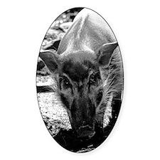(6) Evil Pig Decal