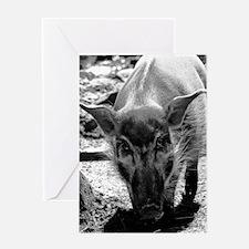 (6) Evil Pig Greeting Card