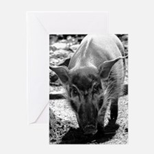 (10) Evil Pig Greeting Card