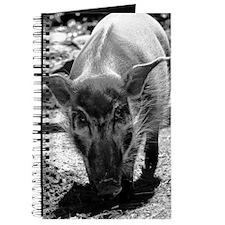(10) Evil Pig Journal