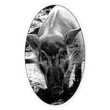 (9) Evil Pig Decal