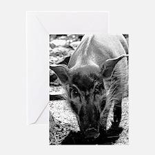(9) Evil Pig Greeting Card
