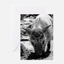 (14) Evil Pig Greeting Card