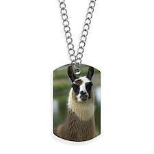 llama1_3Giphone Dog Tags