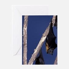 Ipswich Grey-headed flying foxes (Pt Greeting Card