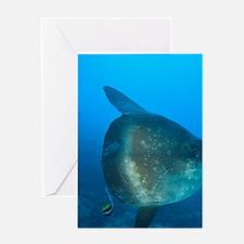 Nusa Penida. Adult Ocean Sunfish (Mo Greeting Card
