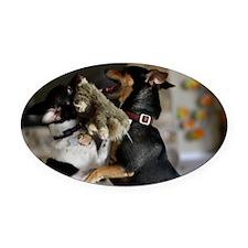 Playful Rat Terrier Dogs Oval Car Magnet