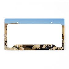 Sheep at nomad encampment License Plate Holder