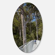 Tahune AirWalk, Tahune Forest Reser Decal