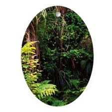 Track to Fairy Falls, Waitakere Rang Oval Ornament
